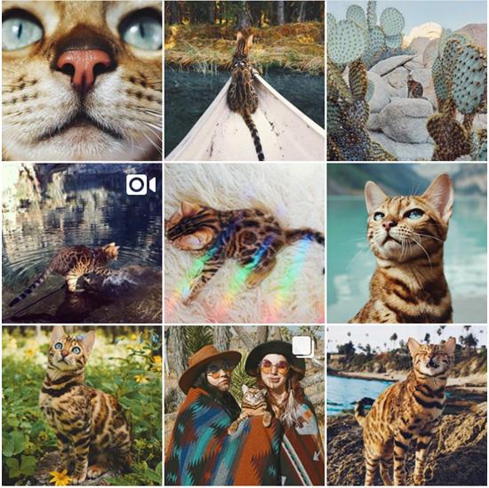 профиль кота в инстаграме